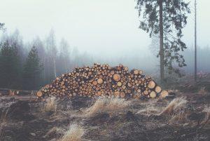 logging clearcut