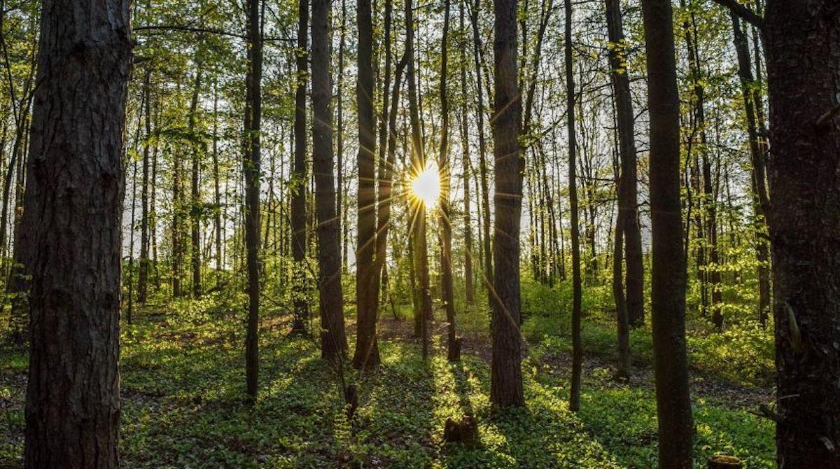 improving wildlife habitat