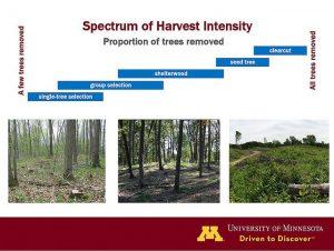 selective cutting harvest intensity spectrum