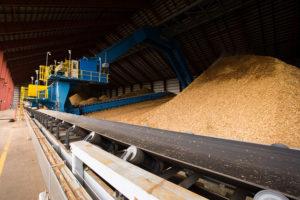 biomass fuel sawdust