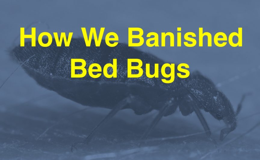 bed bugs in college dorms