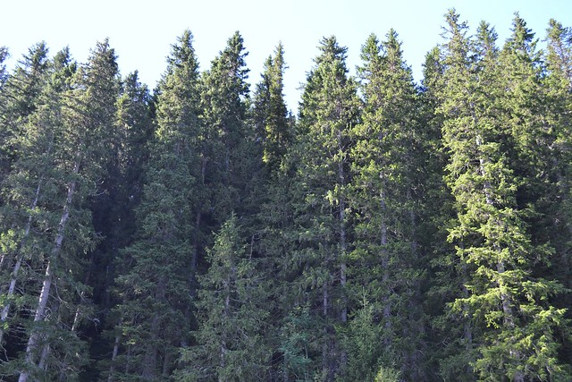 russian sustainable forestry